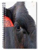 Cow 138 Spiral Notebook