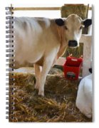 Cow And Little Calf Spiral Notebook