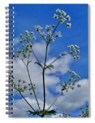 Cow Parsley Blossoms Spiral Notebook