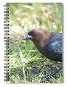 Cowbird Spiral Notebook