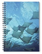 Cownose Rays Spiral Notebook