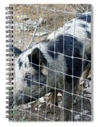 Cowpig On The Farm Spiral Notebook
