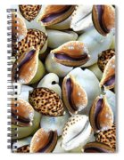 Cowrie Spiral Notebook