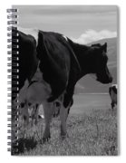 Cows Spiral Notebook