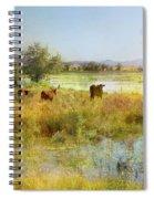 Cows In The Desert Spiral Notebook