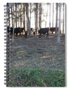 Cows In The Woods Spiral Notebook