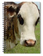 Cows8937 Spiral Notebook