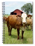 Cows8944 Spiral Notebook