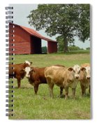 Cows8954 Spiral Notebook