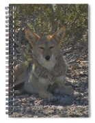 Coyote 2 Spiral Notebook