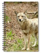 Coyote In Cades Cove Spiral Notebook