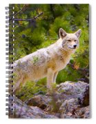 Coyote In The Rocky Mountain National Park Spiral Notebook