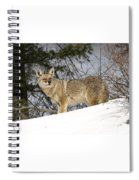 Coyote In Winter Spiral Notebook