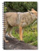 Coyote On A Log Closeup Spiral Notebook