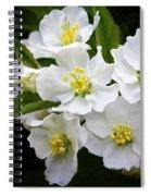Crab Apple Blossom Spiral Notebook