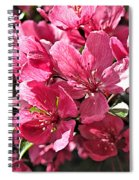 Crab Apple Blossoms 04302015-1 Spiral Notebook