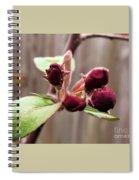 Crab-apple Tree Flower Buds Spiral Notebook