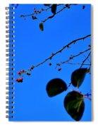 Crab Apples Blue Sky 6510 Spiral Notebook