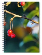 Crab Apples Branches P 6543 Spiral Notebook