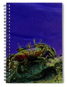 Crab Cakez 5 Spiral Notebook
