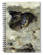Crab Hiding In A Rock On The Seashore Spiral Notebook