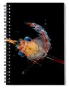 Crab Zoea Spiral Notebook