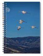Cranes Across Colorado Blue Spiral Notebook
