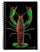Crawfish In The Dark - Greenred Spiral Notebook