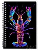 Crawfish Inthe Dark Allsat Spiral Notebook