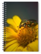 Crawling June Beetle Spiral Notebook