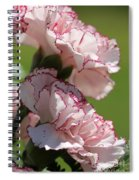 Creamy White With Red Picotee Carnation Spiral Notebook