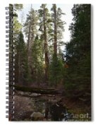 Creek And Giant Sequoias In Kings Canyon California Spiral Notebook
