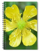 Creeping Buttercup Spiral Notebook