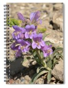 Crested Beardtongue Spiral Notebook