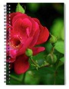 Crimson Red Rose By Kaye Menner Spiral Notebook