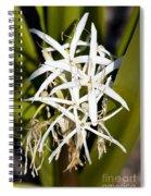 Crinum Spiderlily Flower Spiral Notebook