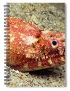 Crocodile Snake Eel Spiral Notebook