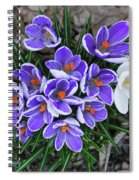 Crocus 6675 Spiral Notebook
