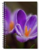 Crocus Glory Spiral Notebook