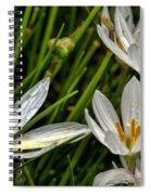Crocus White Flowers Spiral Notebook