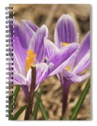 Crocuses 2 Spiral Notebook