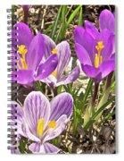 Crocuses 4 Spiral Notebook