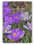 Crocuses 5 Spiral Notebook