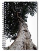 Crone Tree Spiral Notebook