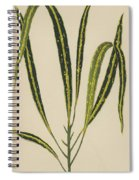 Croton Variegatum Angustifolium Spiral Notebook