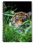 Crouching Tiger Hidden Cameraman Spiral Notebook
