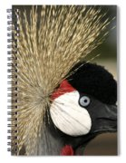 Crown Crane Close Up Spiral Notebook
