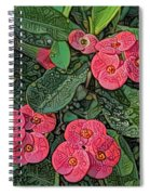 Crown Of Thorns Delight Spiral Notebook
