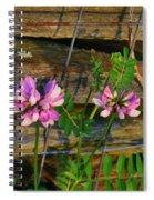 Crown Vetch 1 Spiral Notebook