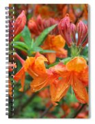 Crowned Creamsicles Spiral Notebook